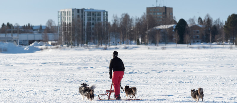 Koronavuosi kääntyi Tornion kaupungin taloudessa odotettua paremmaksi